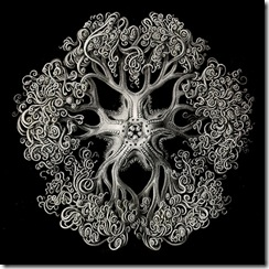 collective_perception