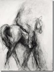 HORSE-AND-RIDER48h36wa