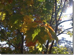 the autumn leaves..