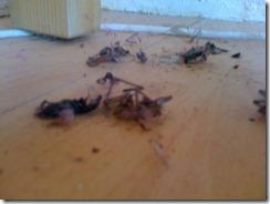spider graveyard